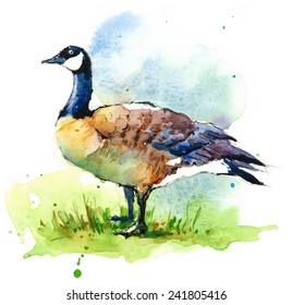 Canada Goose On The Grass Wild Bird Hand Painted Watercolor Illustration