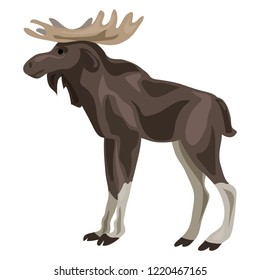 Canadian deer icon. Cartoon of canadian deer icon for web design isolated on white background