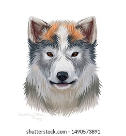 Canadian eskimo dog pet portrait of breed originated in North America. Domestic animal husky purebred mammal. Arctic type isolated on white background digital art illustration