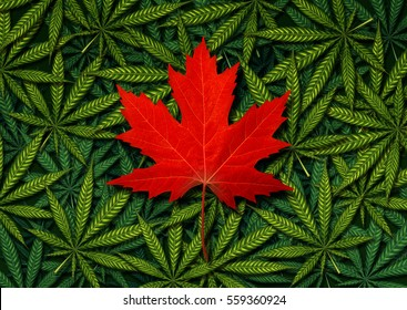 Canadian marijuana concept and Canada cannabis law and legislation social issue as medical and recreational weed usage icon as a red maple leaf on green pot symbols in a 3D illustration style.
