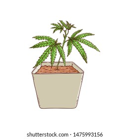 cannabis plant in pot sketch icon. Green hemp plant with leaves, ligalized smoking drug symbol, marijuana herb, can be used in medical design. Isolated illustration