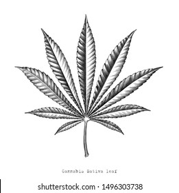 Cannabis Sativa leaf hand draw vintage engraving style clip art isolated on white background,Cannabis Sativa leaf botanical for education