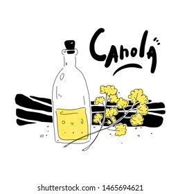 Canola, Canola flower and Canola oil illustration. Use for your project / advertisement or illustration. Brassica napus, canola, rapeseed, oilseeds.