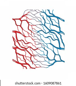 A capillary is a small vessels. Capillaries convey blood between the arterioles and venules. They participate the exchange of gas, nutrients, hormones and wastes between the blood and the tissue cells