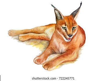 Caracal wild cat isolated on white background. Watercolor. Illustrated. Template. Picture.