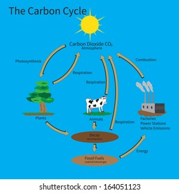 The Carbon Cycle showing how carbon is recycled in the environment.