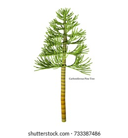 Carboniferous Pine Tree with Font 3d illustration - The earliest conifers date to the Carboniferous Period possibly arising from the Cordaites, a genus of seed-bearing Gondwanan plants.
