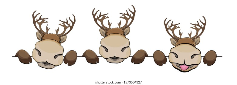 Card with reindeer on white background, funny deers peek a boo