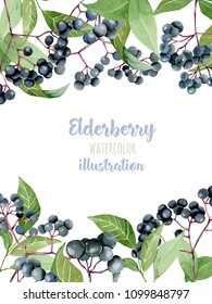 Card template with watercolor elderberry branches, frame border background, hand painted on a white background