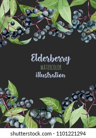 Card template with watercolor elderberry branches, frame border background, hand painted on a dark background