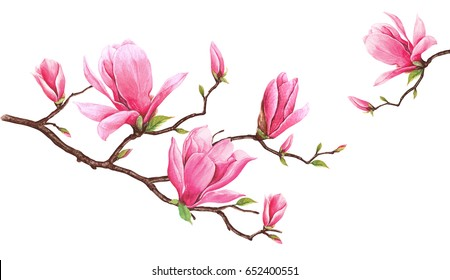 Card template with watercolor magnolia.Hand drawn painting on white background.. Illustration for greeting cards, invitations, and other printing projects. There is space for putting your message.