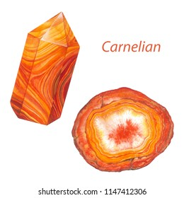 Carnelian point and carnelian agate slice. Watercolor gems. Sacral chakra stones and healing crystals isolated on white background
