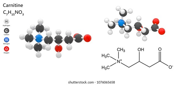 Carnitine is involved in metabolism in most mammals, plants and some bacteria. Molecular Formula: C7H15NO3. 3D illustration. Isolated on white background. The molecule is shown from 2 sides.
