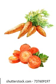 Carrot bunches with green leaves. Sliced carrots. Watercolor illustration isolated on white background.