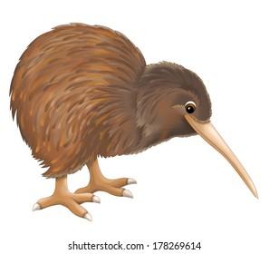 Cartoon animal - kiwi - illustration for the children