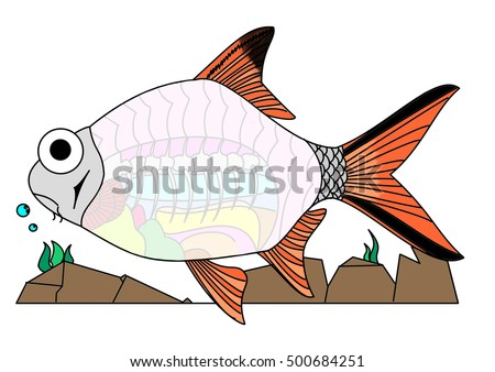 Cartoon Drawing Anatomy Fish Barbonymus Schwanenfeldiitinfoil Stock