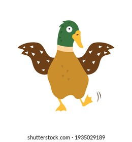 Cartoon duck,  illustration on white isolated background.