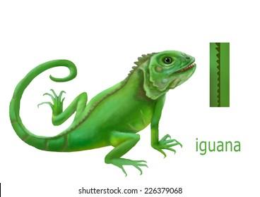 Cartoon Illustration of Colorful Spanish Alphabet or Alfabeto Espanol. Isolated on white. Letter I, iguana,