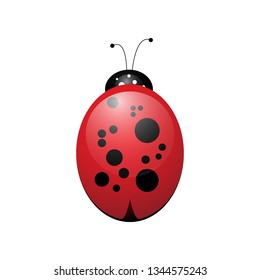 cartoon ladybird funny and cute insect on a white background object for design