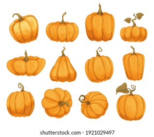Cartoon pumpkin flat icons set. Orange and yellow autumn pumpkins. Different shapes and sizes of pumpkin or gourd vegetable. Collection farm harvest vegetables fresh and tasty