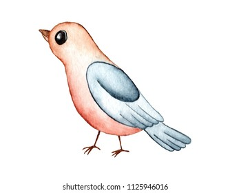 Cartoon Robin Redbreast Bird Watercolor Illustration Isolated on White Background. Symbol of spring - American Robin cartoon hand drawn watercolor bird with red brown feather and greyish blue wings.