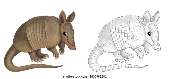 cartoon sketch scene with armadillo on white background - illustration for children