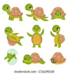 Cartoon smiling turtle. Funny little turtles, walking and swim tortoise animals  set. Collection of cute friendly aquatic and terrestrial reptilians. Adorable sea and land dwelling reptiles.