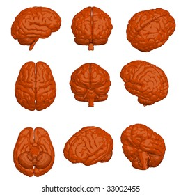 Cartoon style 3D model of brain in various angles.