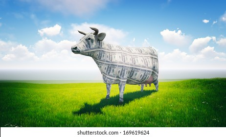 Cash cow at the pasture. Cattle farm. Livestock breeding.