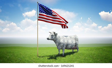 Cash cow standing on the green grass field under the American flag