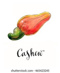 Cashew, fresh cashew nut fruit, hand drawn - watercolor Illustration