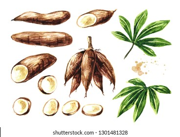 Cassava root, tuber, leaf and slices set. Manihot esculenta. Watercolor hand drawn illustration, isolated on white background