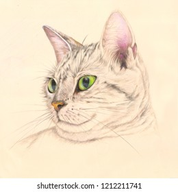 Cat in colored pencils. Hand drawn. Jpg image