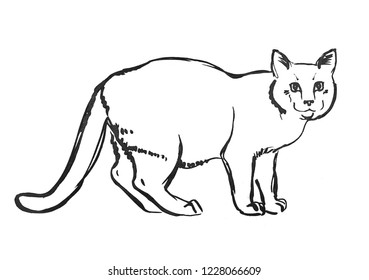 Cat drawing. Hand drawn sketch, Black and white doodle for your design, poster.