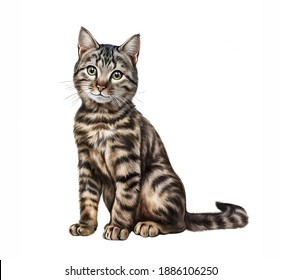 The cat (Felis silvestris catus) realistic drawing illustration for pet encyclopedia isolated image on white background