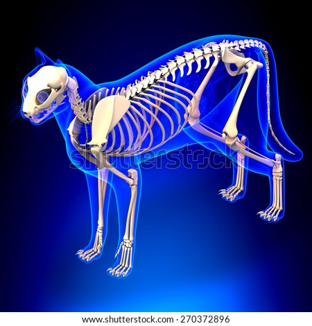 Cat Internal Organs Anatomy Skeleton Stock Illustration 270372896 ...