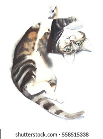 Cat kitten lying playing funny pet watercolor painting illustration isolated on white background