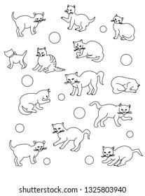 cat kitty tomcat