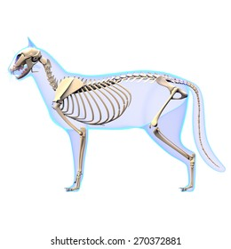 Cat Skeleton Anatomy Cat Stock Illustration 736599598 - Shutterstock