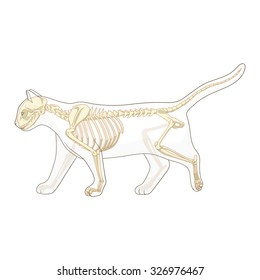 Royalty Free Cat Anatomy Images Stock Photos Vectors Shutterstock