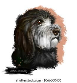 Catalan Sheepdog dog breed isolated on white background digital art illustration. Breed of Catalan Pyrenean dog used as sheepdog. Cute pet hand drawn portrait. Graphic clipart design realistic animal