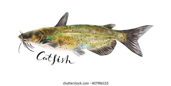 Catfish whole isolated on a white background