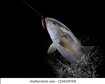 Cathing amberjack fish in black background with splashes hooked by jigging 3d render