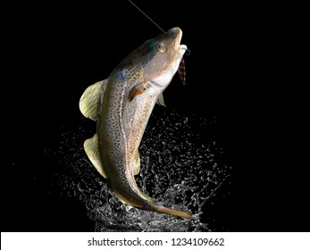 Cathing of cod fish in black background with splashes hooked by slow jigging inchiku bait 3d render