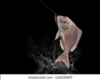 Cathing red porgy fish in black background with splashes hooked by jig 3d render