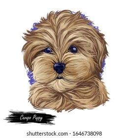 Cavapoo puppy digital art illustration of cute canine animal of beige color. Cavoodle or crossbreed dog, offspring of Poodle and Cavalier King Charles Spaniel. Red Toy Cavoodle hand drawn portrait
