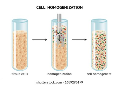 Cell homogenization. Breaking cells and tissues. Cell homogenate