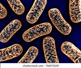 Cellular organelle mitochondria. 3d illustration