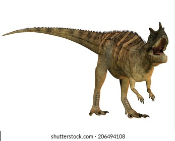 Ceratosaurus on White - The Ceratosaurus is a horned theropod dinosaur found in North America from the Jurassic Period.