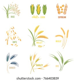 Cereal Plants  icons illustrations. Isolated symbols of wheat and rye ears, seeds and oat or barley millet with rice sheaf. Concept for organic products label, harvest and farming, grain, bakery